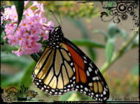 Butterfly pollination, Earth Day, Energy Tips, Earth
