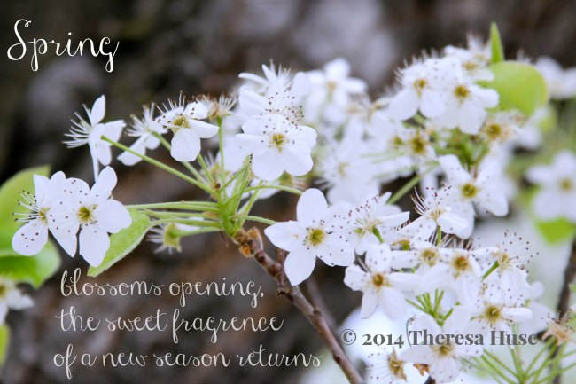Spring_dogwood blossom and a spring quote_Theresa Huse 2014 DearCreatives.com lifestyle site with DIY Crafts