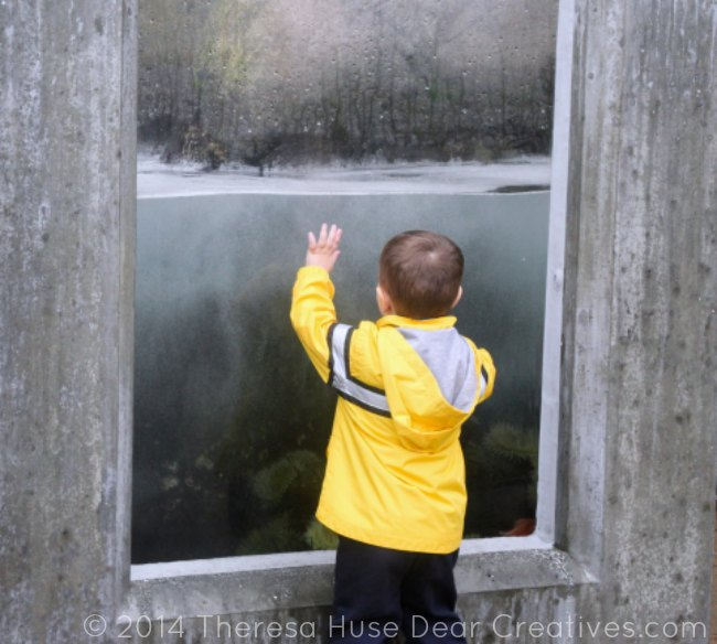 Child watching tide waves at Monterey Bay Aquarium