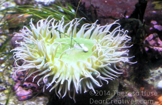 Sea Urchin_ Monterey Bay Aquarium_
