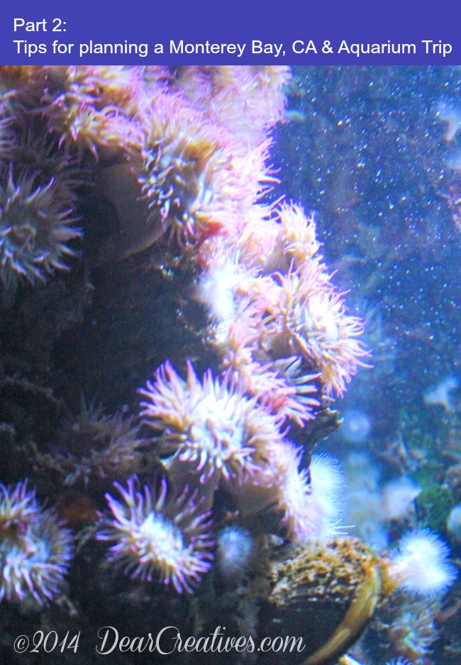 Part 2_Monterey Bay Aquarium_