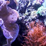 Tips for Planning a Monterey Bay Aquarium Trip_