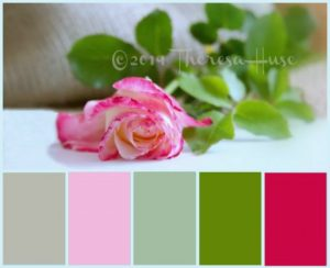Color Palette Collage with PicMonkey Collage DIY