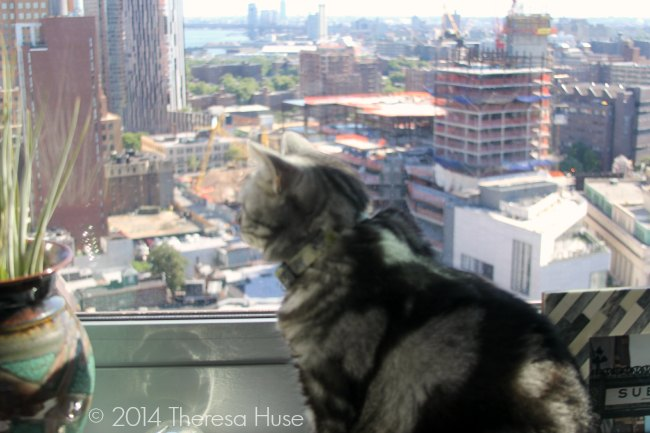 cat looking at Brooklyn New York view_