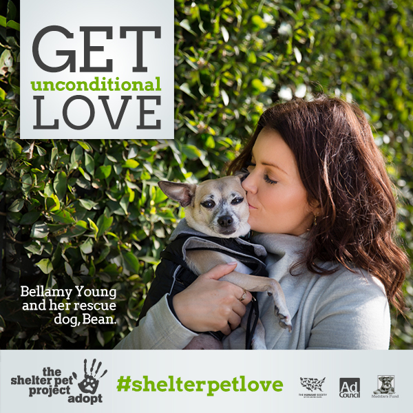 #ShelterPetLove | Bellamy Young and her adopted dog