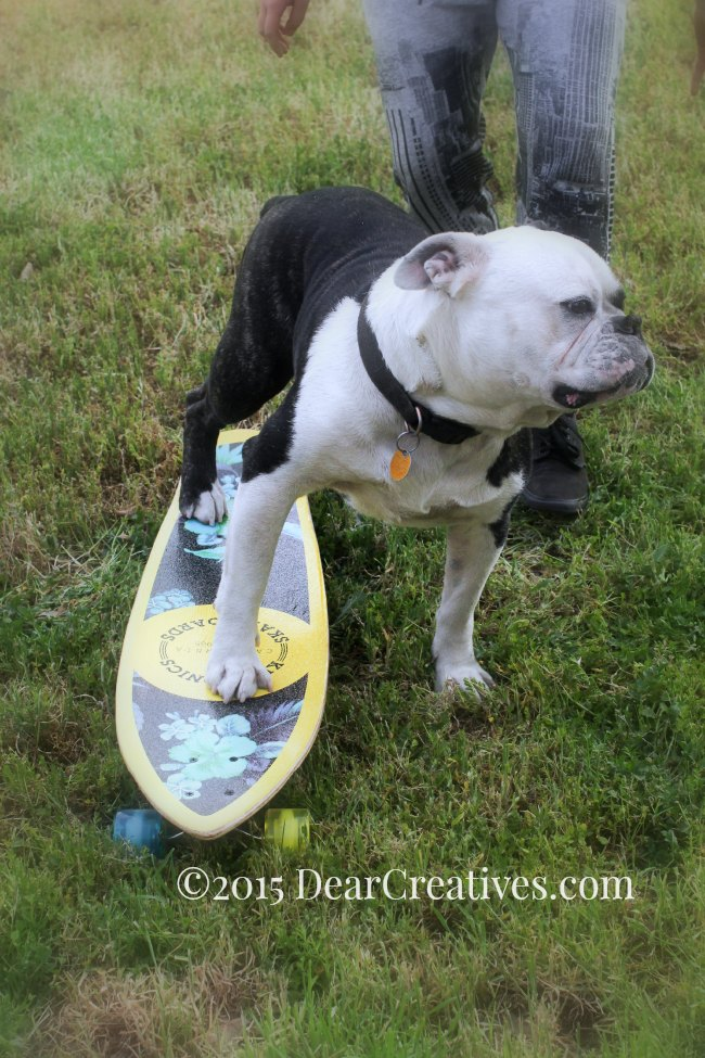 Life – Summer, Photography And Skateboard Riding With Our Bulldog