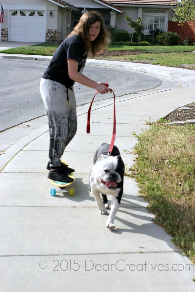 Family Pets |Bulldog pulling someone on a skateboard