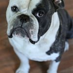 Tips For Dog Lovers   Top Ways To Show Your Dog You Love Them