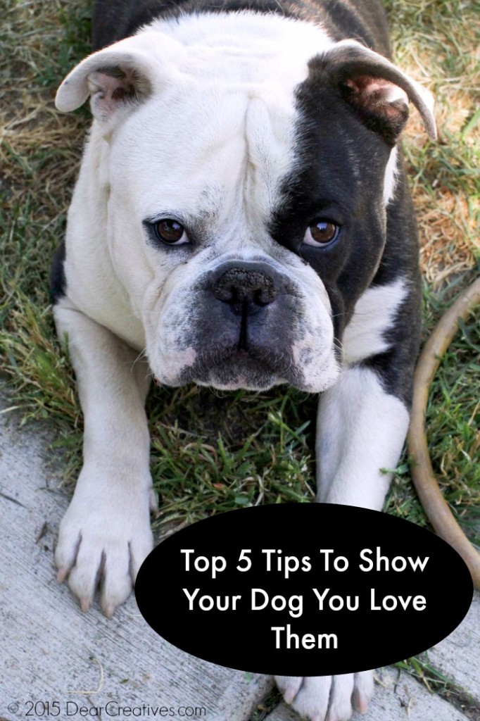 Family Pets |  Top 5 Tips To Show Your Dog You Love Them|Old English Bulldog | dogs |