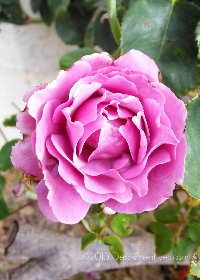 lowest priced unlimited plans | Cell Phone zte zmax |ccell phone pic of a rose