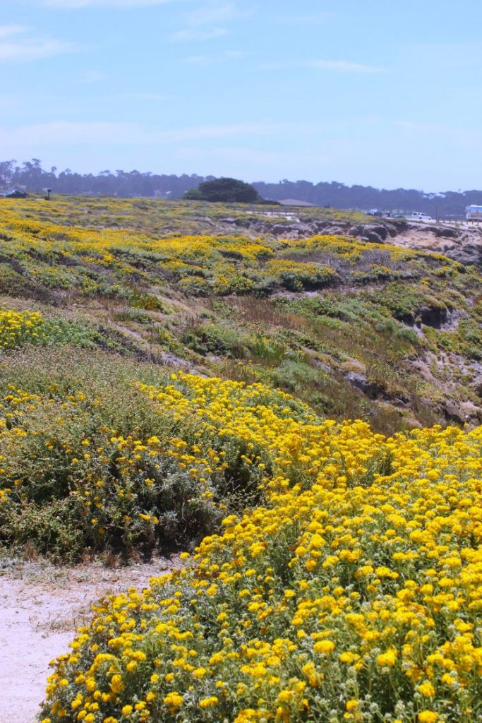 Travel |Carmel California |Carmel by the sea 17 mile drive