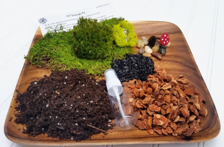 DIY craft supplies terrarium kit