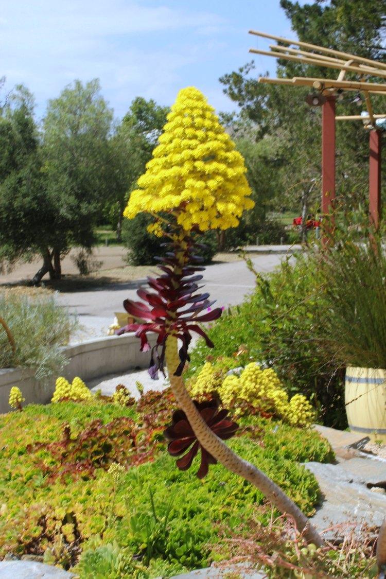 San Luis Obispo Botanical Garden- DearCreatives.com Flowers outside the botanical garden's shop next door to the botanic garden at El Chorro Park